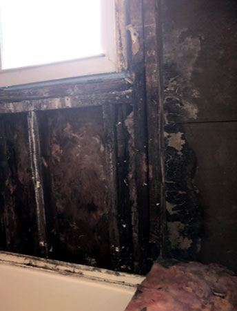 Mold Information - Serving New Jersey and Pennsylvania
